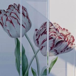 Kamerscherm Tulp